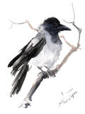 Hooded Crow Art by Suren Nersisyan