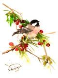 Chickadee 1 Affiches par Suren Nersisyan