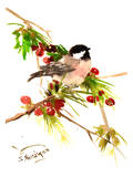 Chickadee 1 Prints by Suren Nersisyan