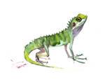 Agama Lizard Art by Suren Nersisyan
