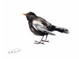 Blackbird Affiches par Suren Nersisyan