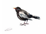 Blackbird Prints by Suren Nersisyan