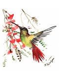 Hummingbird 17 Prints by Suren Nersisyan