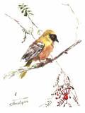Weaver Bird Affiches par Suren Nersisyan