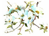 Dogwood Flowers Prints by Suren Nersisyan