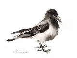 Hooded Crow Posters by Suren Nersisyan