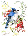 Blue Jay And Berries Poster by Suren Nersisyan
