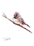 Zebrafinch Art by Suren Nersisyan