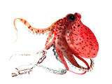 Octopus Deep Red Poster by Suren Nersisyan
