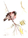 Male Sparrow Affiches par Suren Nersisyan