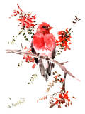 Rosefinch Prints by Suren Nersisyan
