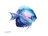 Blue Discus 2 Prints by Suren Nersisyan
