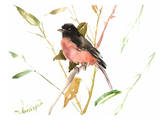 Eastern Towhee Bird Print by Suren Nersisyan