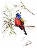Painted Bunting 2 Posters by Suren Nersisyan