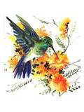 Hummingbird 6 Prints by Suren Nersisyan