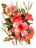 Hibiscus Print by Suren Nersisyan