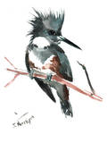 Belted Kingfisher Prints by Suren Nersisyan