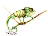 Chameleon Kunstdrucke von Suren Nersisyan