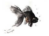 Black Moor, Goldfish Art by Suren Nersisyan