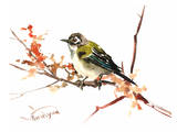 Black Capped Vireo Posters by Suren Nersisyan