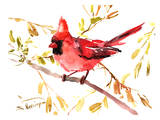 Cardinal rouge Affiches par Suren Nersisyan