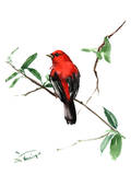 Summer Tanager 5 Posters by Suren Nersisyan