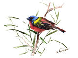 Painted Bunting 3 Prints by Suren Nersisyan