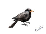 Blackbird 2 Art by Suren Nersisyan
