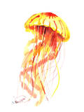 Jellyfish Fire Prints by Suren Nersisyan