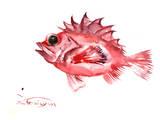 Big Eye Redfish Posters by Suren Nersisyan