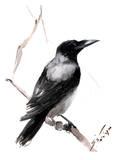 Hooded Crow 2 Art par Suren Nersisyan