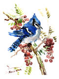 Blue Jay 8 Prints by Suren Nersisyan
