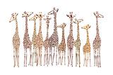 Giraffer Giclee-tryk i høj kvalitet af  Milovelen