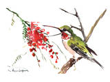 Ruby Throated Hummingbird Prints by Suren Nersisyan