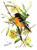 Baltimore_Oriole Prints by Suren Nersisyan