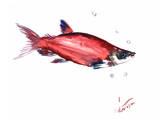 Salmon 3 Print by Suren Nersisyan