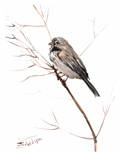 Field Sparrow Posters par Suren Nersisyan