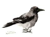 Crow 5 Affiches par Suren Nersisyan