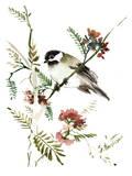 Mountain Chickadee Affiche par Suren Nersisyan