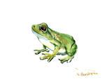 Common Frog Plakater af Suren Nersisyan