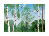 Landscape with Trunks of Birches and Pine Tree in the Foreground and Silhouettes of Different Trees Print by  Milovelen