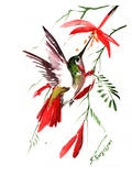 Hummingbird 8 Prints by Suren Nersisyan