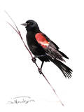 Red_Winged Blackbird Poster by Suren Nersisyan