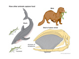 How Different Animals Capture Food Posters