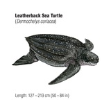 Leatherback Sea Turtle (Dermochelys Coriacea), an Endangered Species Art