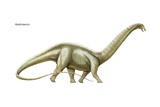 "Apatosaurus (""Deceptive Lizard,"" Formerly known as Brontosaurus) Art"