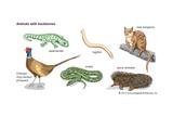Animals with Backbones Prints