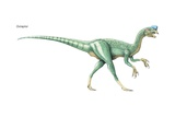 """Oviraptor, """"Egg Thief"""" or """"Egg Robber,"""" Late Cretaceous Dinosaur Posters"""