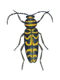 Long-Horned Beetle Posters
