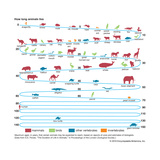 Life Span of Animals Posters